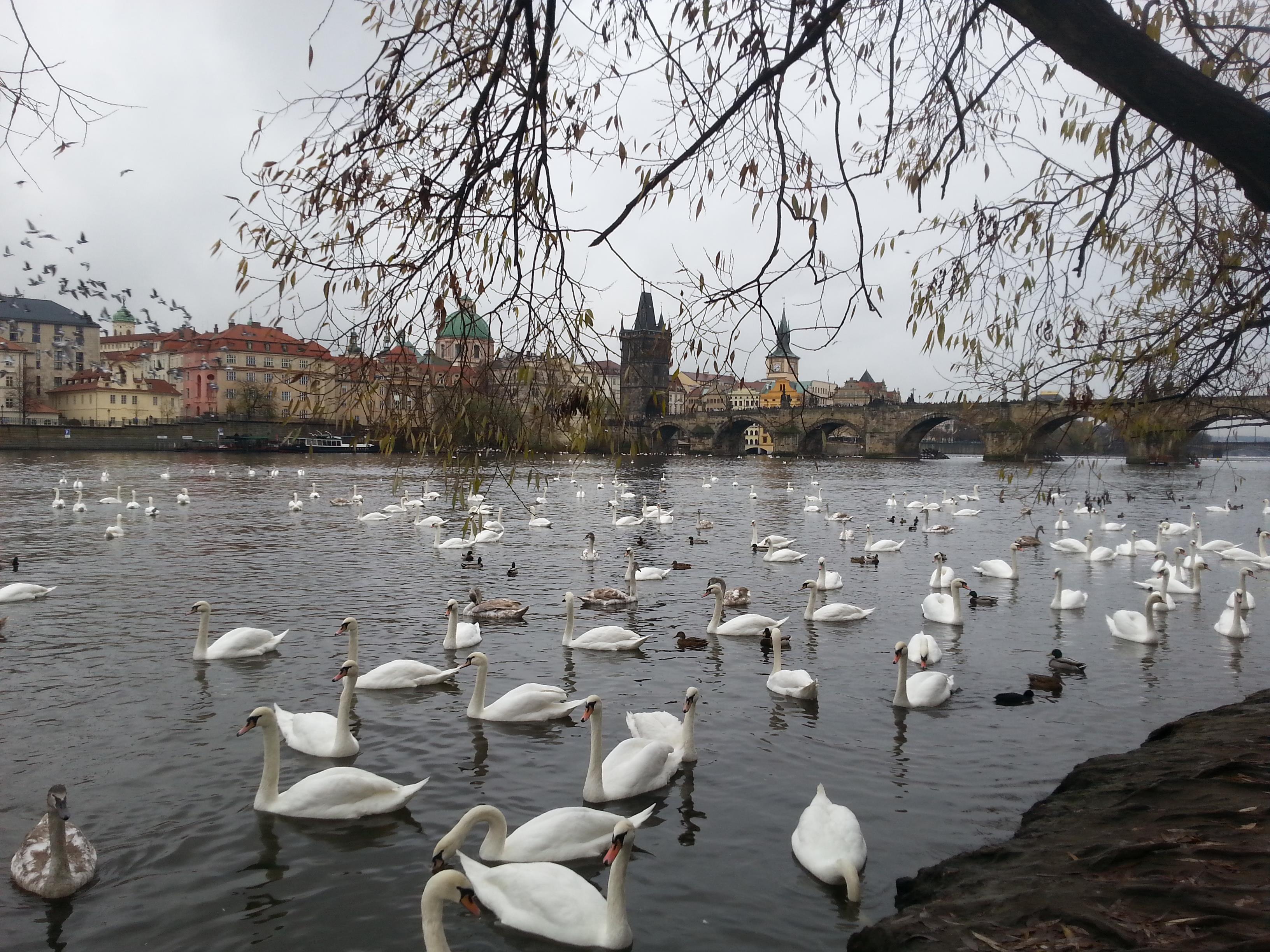 Prag Vlatna Nehri